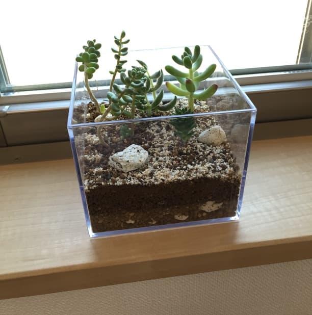 はじめてのテラリウム!多肉植物+透明なケースで机の上の箱庭ができた!