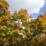 【α5100】黄緑・黄・オレンジ・赤のグラデーションがきれい!公園で紅葉を撮りました!